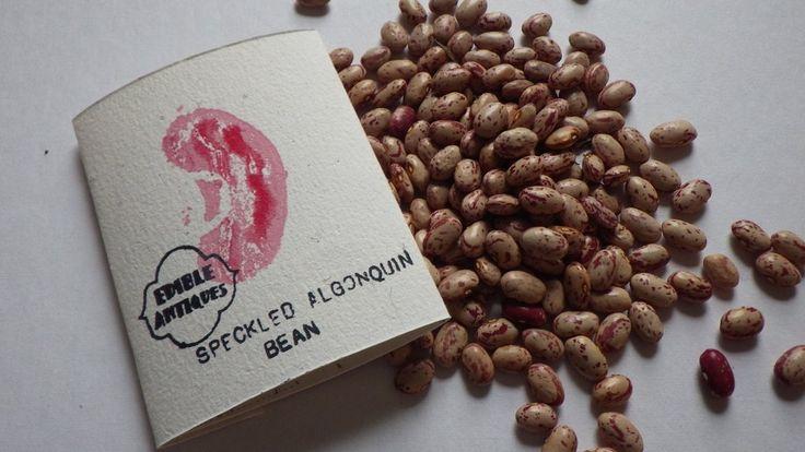"""""""Speckled Algonquin"""" Bean Seeds"""