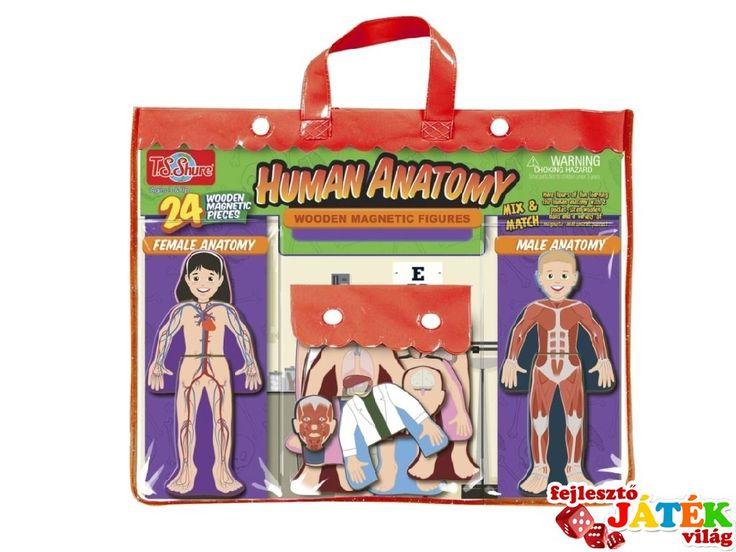 Mágneses fa öltöztető, Az emberi test (TS, kreatív játék, 3-5 év)
