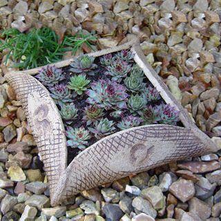 Sempervivum in ceramic planter