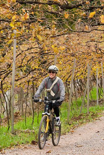 Roteiro pedal - Vale dos vinhedos