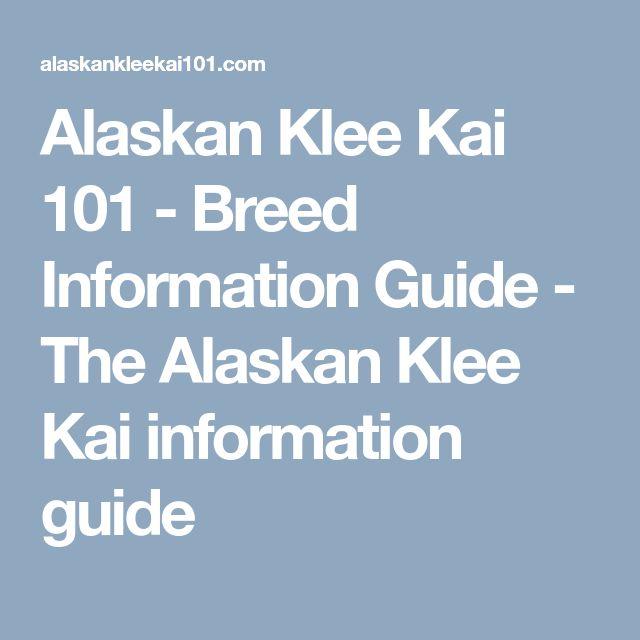 Alaskan Klee Kai 101 - Breed Information Guide - The Alaskan Klee Kai information guide