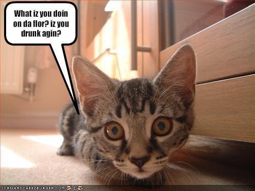 How You Doin Cat