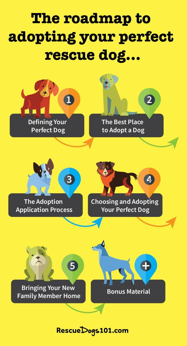 The Roadmap To Adopting Your Perfect Rescue Dog Rescue Dogs Dog Adoption Dogs And Kids