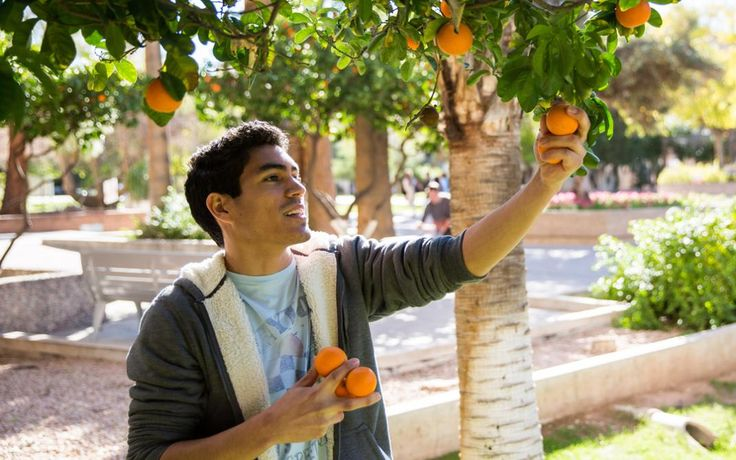 The Top 20 These are the colleges working hardest to protect the planet in 2016  Senior sustainability major Brandon Ruiz picks oranges on Cady Mall at Arizona State. The orange harvest has been organized for the last eight years by the ASU Arboretum and ASU Cares.