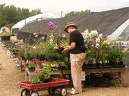The Flower Factory Nursery, Stoughton, WI   The midwest's largest selection of perennials
