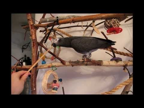 How to target train your parrot