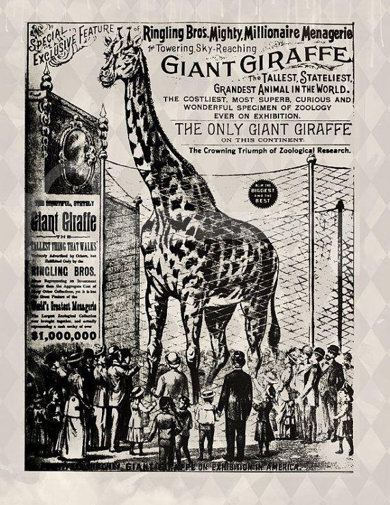 Giraffe Circus Poster Advertisement digital by TanglesGraphics, $1.00