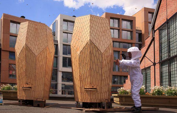 Für Bienen einen neuen Lebensraum in der Stadt schaffen