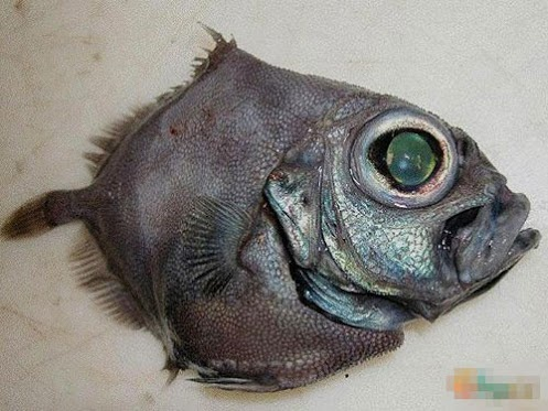 Weird - Google+ - Deep-sea strange creatures found after the tsunami