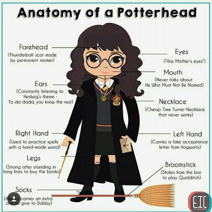 Anatomy Of a Potterhead