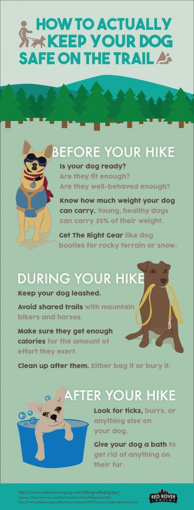 How To Actually Keep Your Dog Safe On The Trail