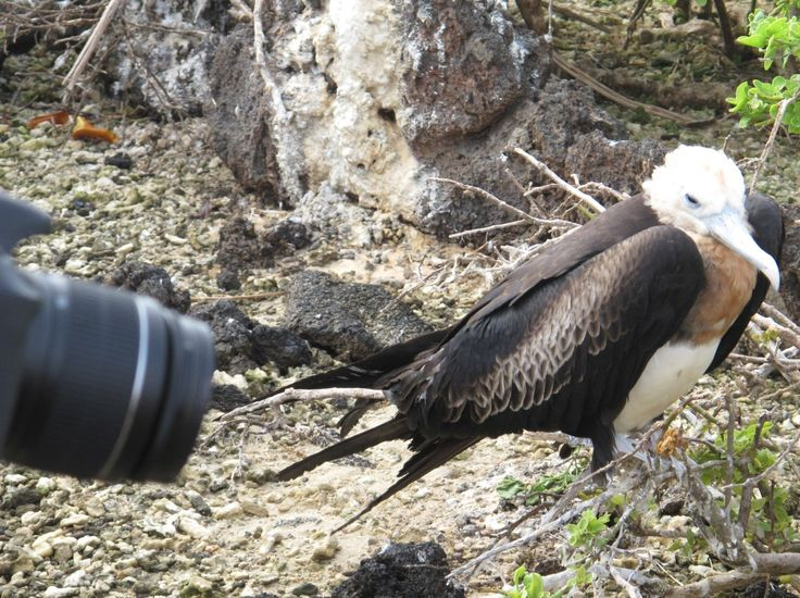 Galapagos birds need to be used to invasive lenses.