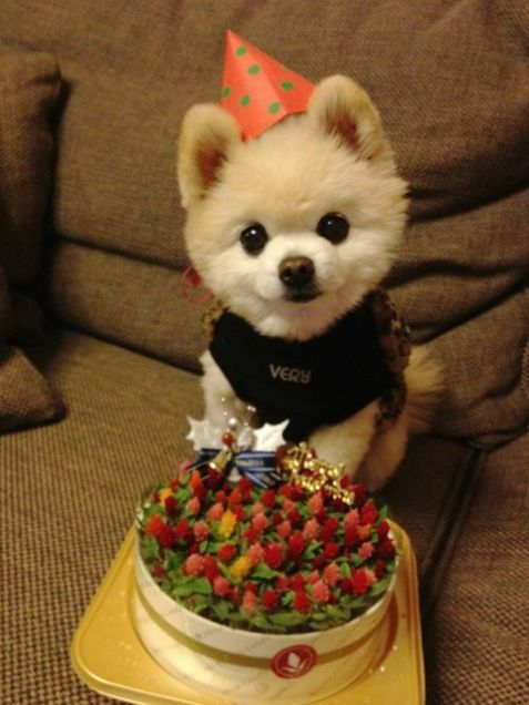 54 Best Images About Pomeranian Birthday On Pinterest
