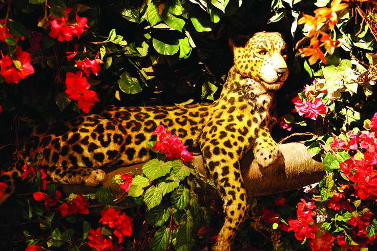 Our Jaguar Maya using her camouflage to blend in and hide in her tree! A Wild Place to Shop and Eat! http://www.therainforestcafe.co.uk