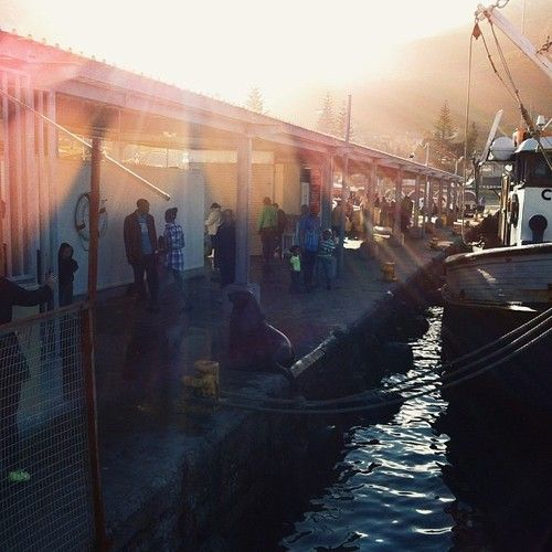 Kalk Bay Harbour, Cape Peninsula