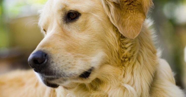 Remédio caseiro para cachorro com coceira