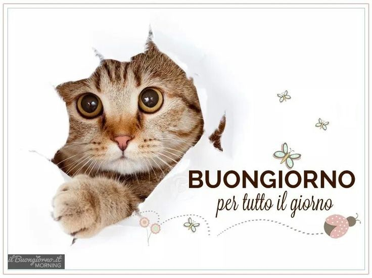 191 best images about buongiorno on pinterest reasons to for Buongiorno sms divertenti