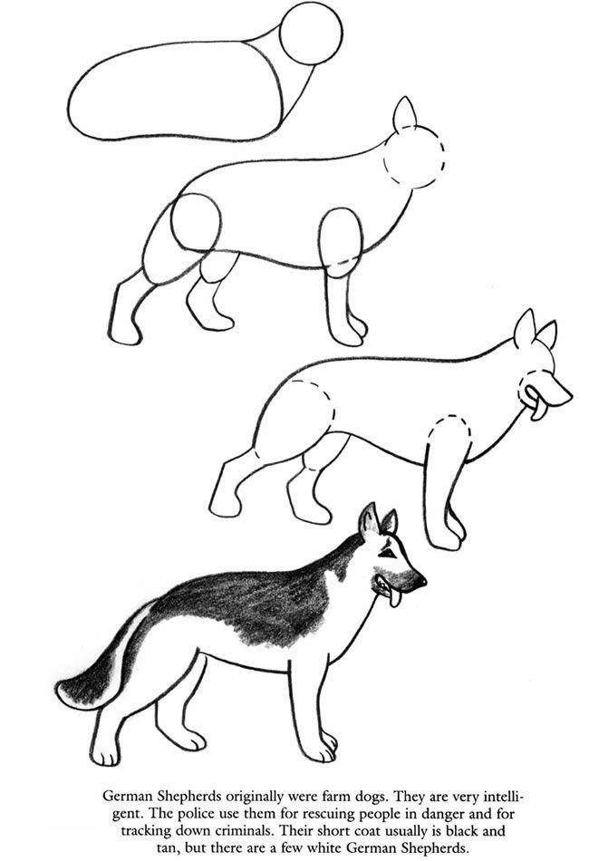 how to draw dogs pages