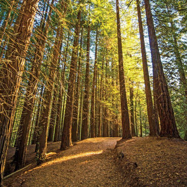 Road Trip: Gold Beach Oregon to Mendocino, California