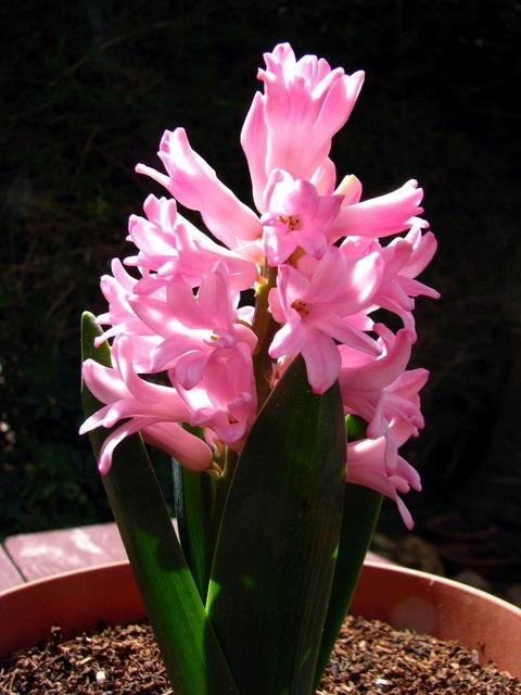 Jak Dbac O Kwiaty Doniczkowe Flowers My Secret Garden Garden Show