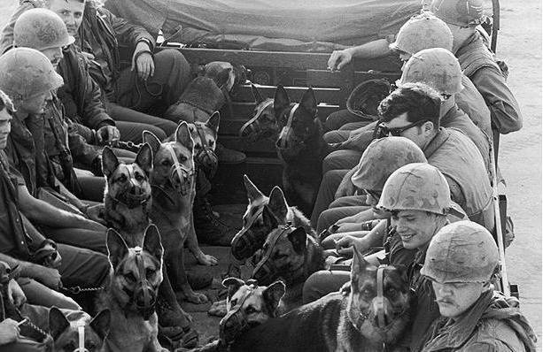 WW II  War dogs
