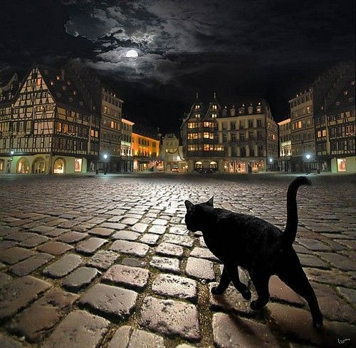 Cat is Out to Play   by Igor Zenin :: LOVE This Photograph, Great Contrasts   ( Strasburg, Germany ): Photos, Animals, Black Cats, Art, Igor Zenin, Night, Blackcats, Stray Cat, Photography