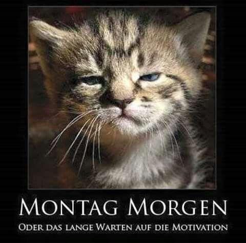 Montag Morgen                                                                                                                                                                                 Mehr