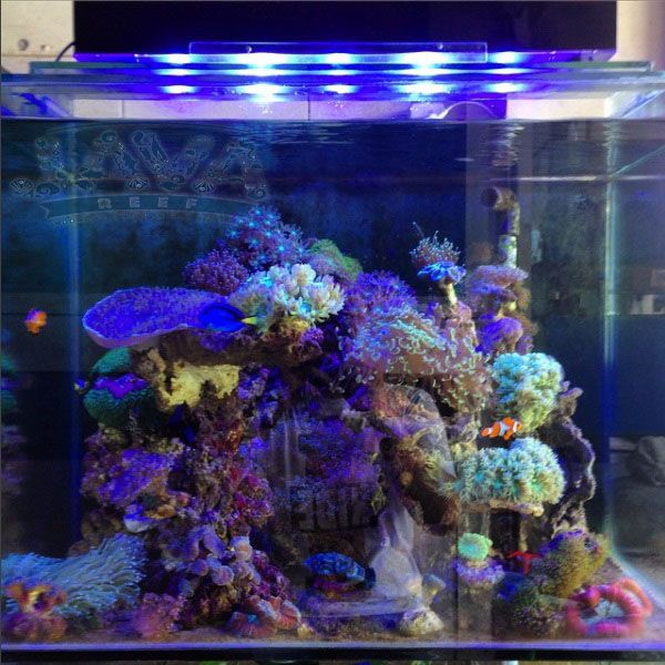 dekorasi aquarium air laut di jakarta timur