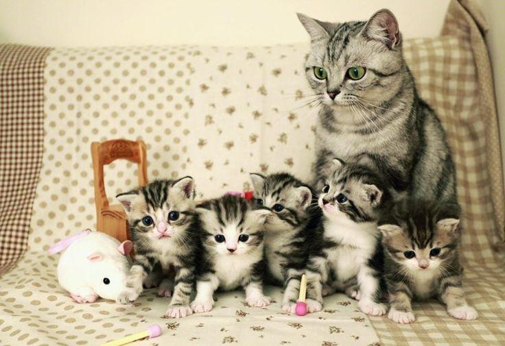 ร ปภาพแมว ล กแมว ล กแมวเหม ยว ส ตว เล ยง แมวน าร ก ล กแมว ท น าร กท ส ดในโลก Cute Cats Kittens Cutest Cute Animals