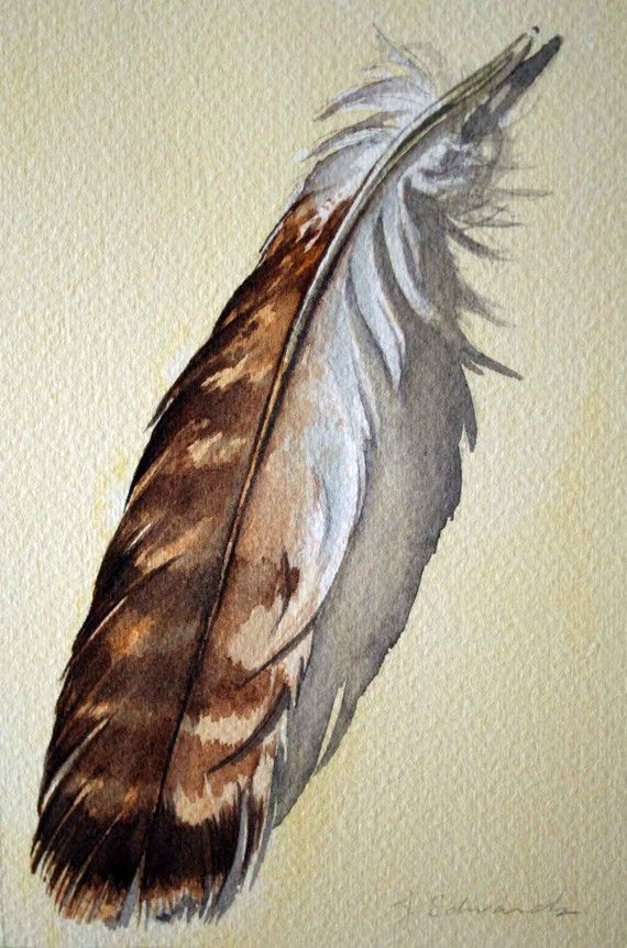 red tail hawk feather watercolor - Google Search