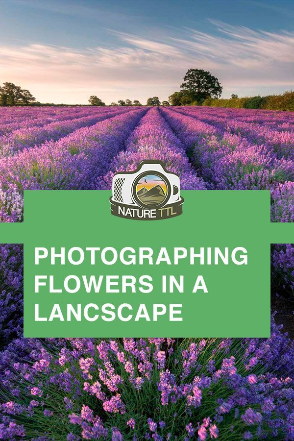 Verschönern Sie Ihre Landschaftsfotografie, indem Sie Blumen in das Foto aufnehmen. Lerne …   – Travel photography