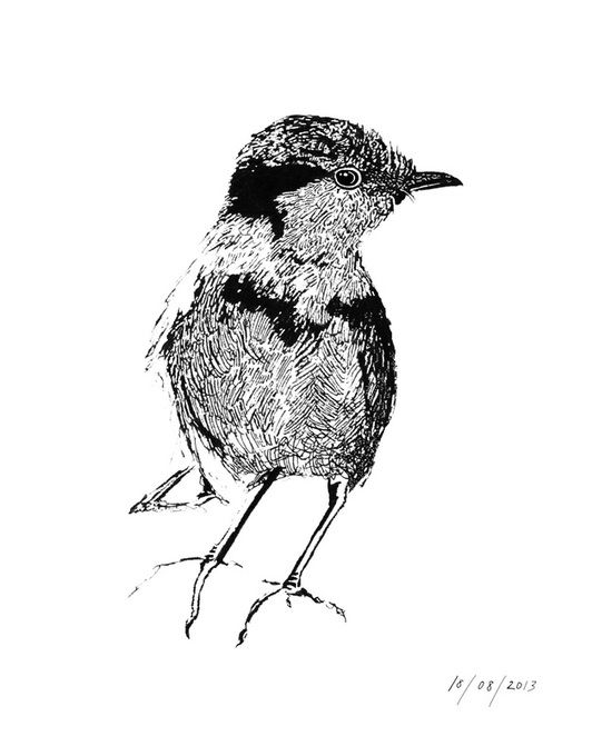 """""""Weightless not flightless"""" - Ink drawing by Stacey Rumble"""