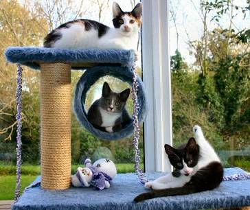 http://www.fabcats.org/behaviour/cat_friendly_home/info.html : good article on making cat-friendly homes