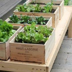 Container Gardening Idea: Make a Wine Box Salad Garden!   The Kitchn