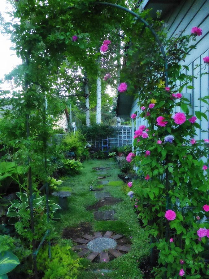 Love Garden Roses: Pin By Lynda Backman On My Garden At Home