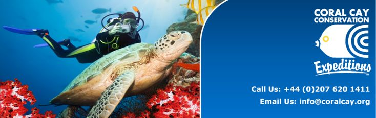 Coral Cay Conservation, marine conservation organisation ensures the health of coral reefs and forests. Join our expeditions and help give back to the environment. Coral Cay Conservation is a division of the Lifesigns Group.