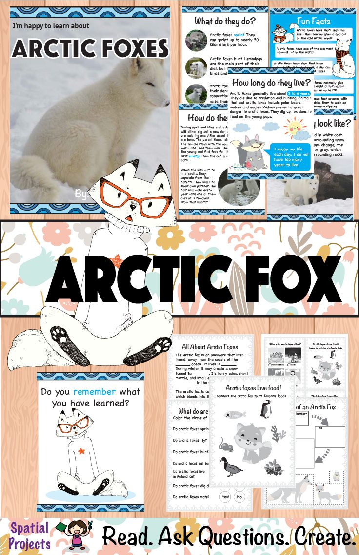 All About Arctic Foxes Nonfiction Animal Writing Fox