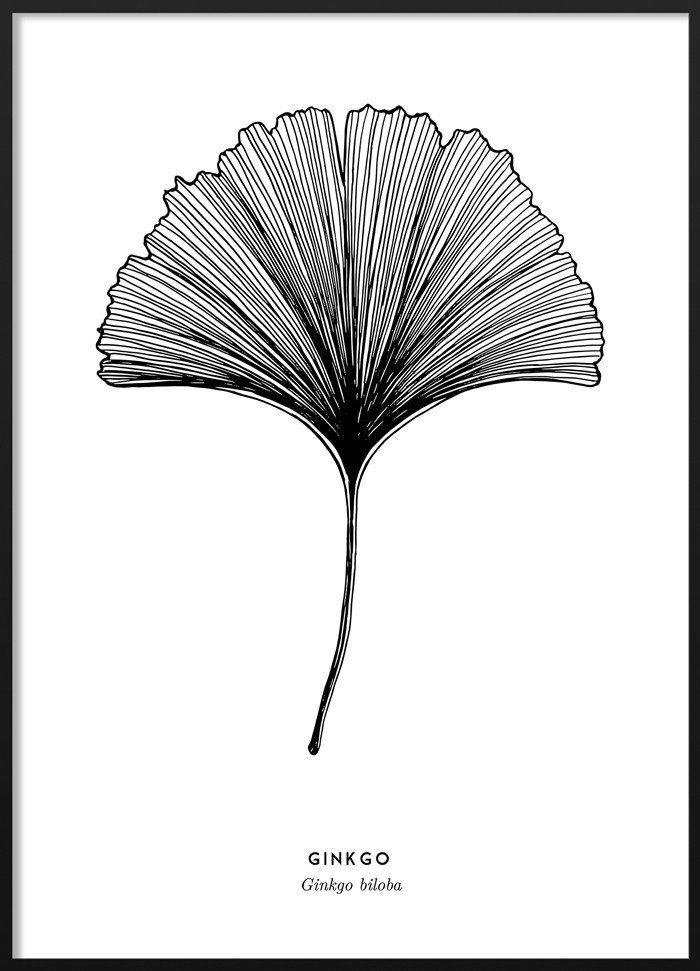 Ginkgo Poster #blackandwhite #ink #illustration #scandinavian #ginkgo #leaf #poster