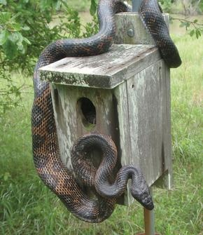 Image result for Snake in the mailbox