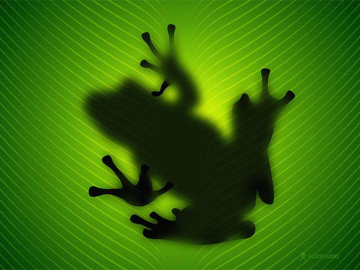 frogs green shadow image picture and wallpaper