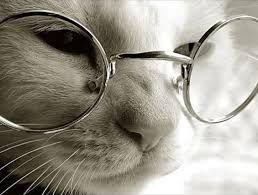 Resultado de imagen para gato con gafas estudiando