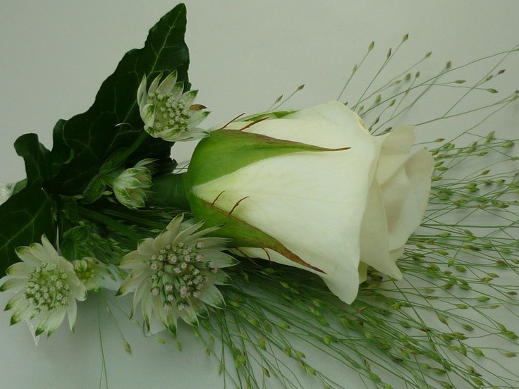 White rose buttonhole with astrantia, ivy and panicula