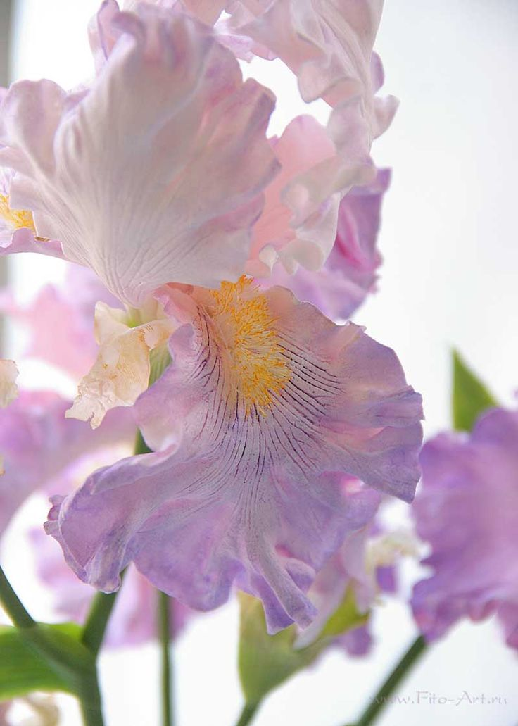 Clay handmade irises, flowers from polymer clay : Светло-сиреневые ирисы. Керамическая флористика - В НАЛИЧИИ - Fito Art