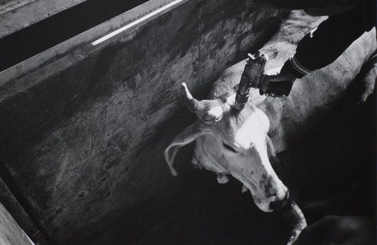 Philip Perkis, Las Juntas, Jalisco, Mexico, 1991