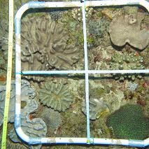 #GreenBubblesRISE for a #sustanible #diving.  Coral reef system survey at Ponta do Ouro, Mozambique. Photo frames examples from Ponta do Ouro reefs