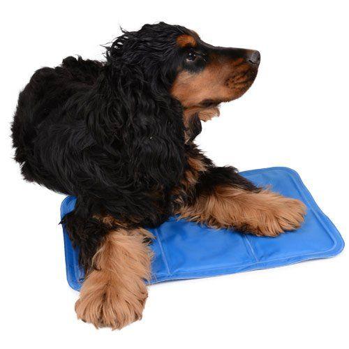 Tapis De Fouille Pour Chien Idées Dimages à La Maison - Carrelage salle de bain et tapis rafraichissant chien