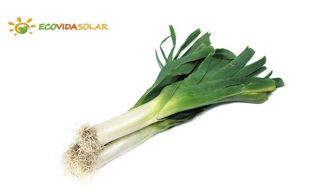 Puerro (Allium ampeloprasum) - Propiedades del puerro