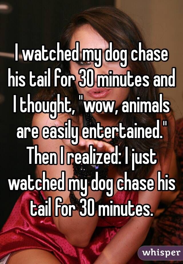 """""""I watched my dog chase his tail for 30 minutes and I thought, """"wow, animals are easily entertained.""""  Then I realized: I just watched my dog chase his tail for 30 minutes."""""""