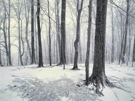 Vinter - Grått och molnigt i skogen i dag