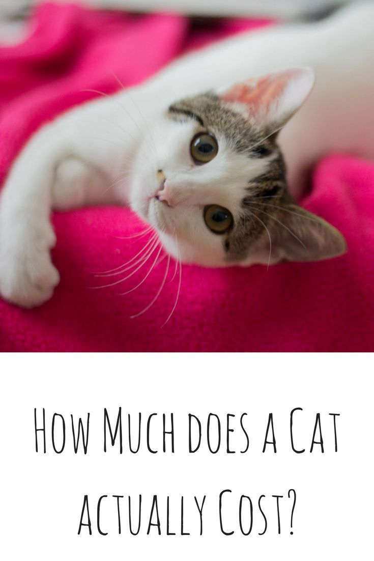 How Much Does A Cat Actually Cost Cat Adoption Tips Kitten Adoption Checklist How To Adopt A Cat Dallas Pets Alive Kitten Adoption Cat Adoption Cats